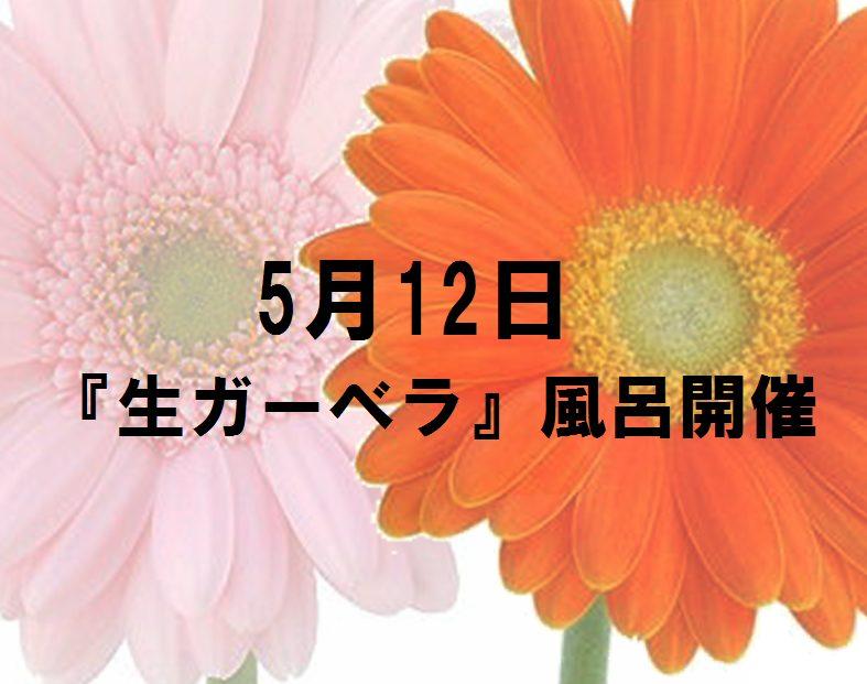 母の日『生ガーベラ風呂』開催!